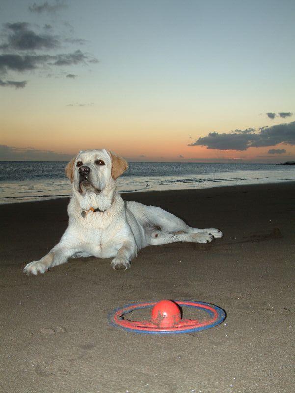 Nasz pies odpoczywa po wieczornych zabawach na plaży la Tejita