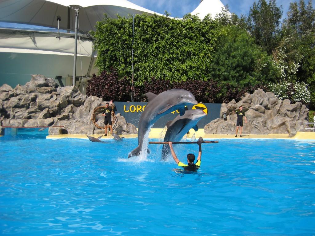 Delfiny w Loro Parque na Teneryfie