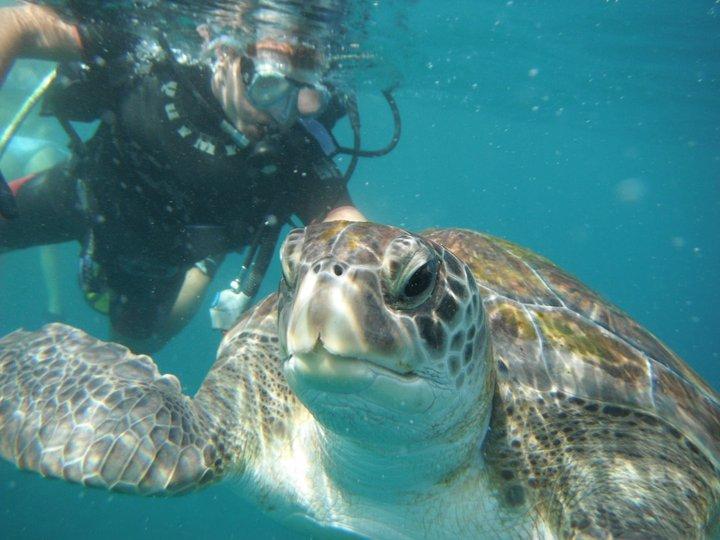 Pływanie z żółwiami na Teneryfie