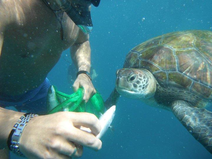 Żółwie na Teneryfie